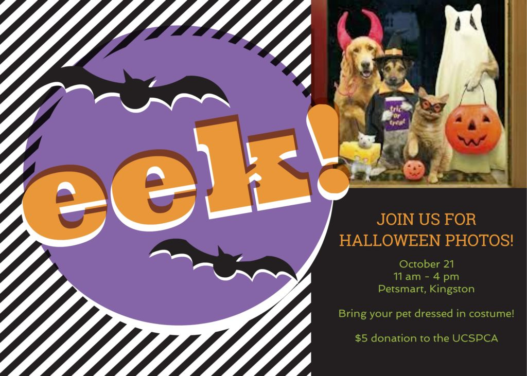 Halloween Photos @ PetSmart | Kingston | New York | United States